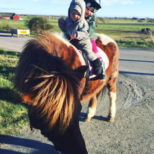 Barnen på Dykarns och hästen Hugur